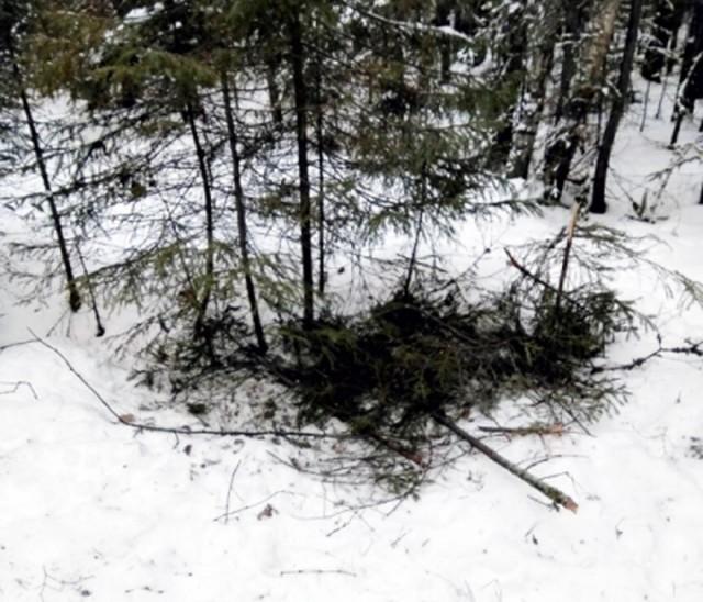 สุดทึ่ง!!! สุนัขช่วยเหลือเด็กชายหลงป่า มอบไออุ่นให้ท่ามกลางอุณหภูมิ -6 องศาฯ