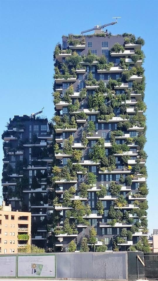ทึ่ง! ป่าไม้แนวตั้งในมิลาน ปกป้องอาคารจากมลภาวะต่าง ๆ และช่วยกรองคาร์บอนไดออกไซด์
