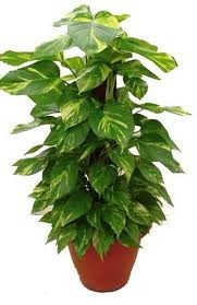 ปลูกต้นไม้ 3 ชนิด โรคภูมิแพ้จะหายไป จมูกโล่ง หายใจคล่องมาก