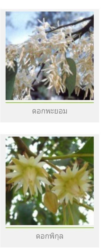 ดอกไม้ประจำจังหวัด ทั้ง 77 จังหวัดของประเทศไทยตอนที่ 1