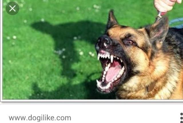 """อึ้ง!! """"เมื่อยุงคือสัตว์""""ที่ฆ่าคนตายมากที่สุดในโลก !"""
