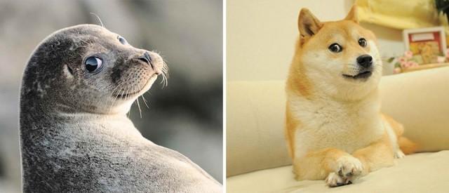 14ภาพน่ารัก ที่จะทำให้คุณรู้ว่าแมวน้ำ มันก็คือหมาน้อยทะเล