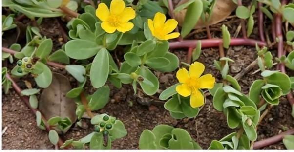วัชพืช มีประโยชน์อย่างน่าทึ่ง !!!