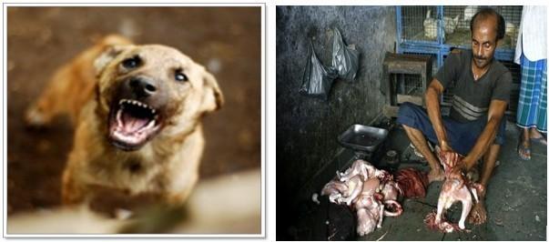 คนกลายเป็นสุนัข !!!  แถมเรื่อง วิบากกรรมของเพชรฆาตเป็ดและไก่ !!!
